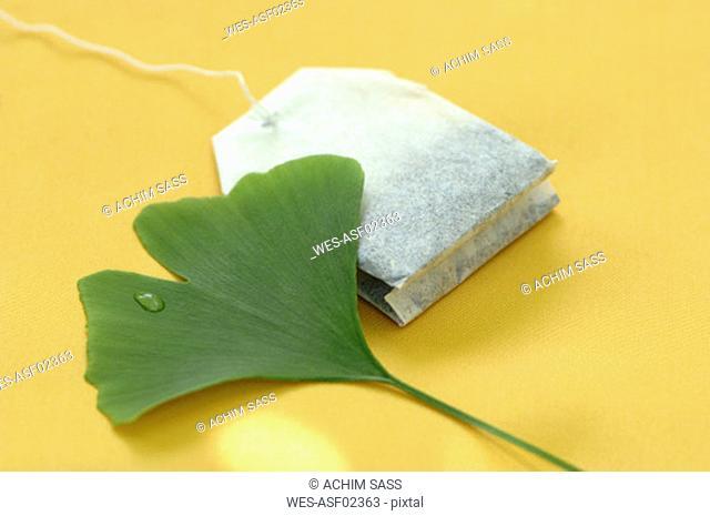 Ginkgo biloba and tea bag