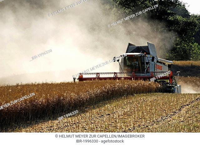 Combine harvester threshing rape, Blieschendorf, Mecklenburg-Western Pomerania, Germany, Europe