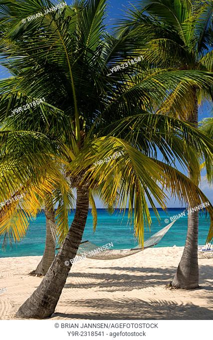 Palm trees and hammock along Seven-Mile Beach, Grand Cayman, Cayman Islands, West Indies