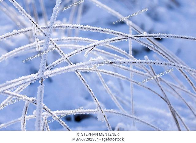 Blades of grass covered with hoarfrost