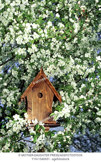 Front view of a fancy cedar birdhouse surrounded by blooming Crabapple tree branches in Spring