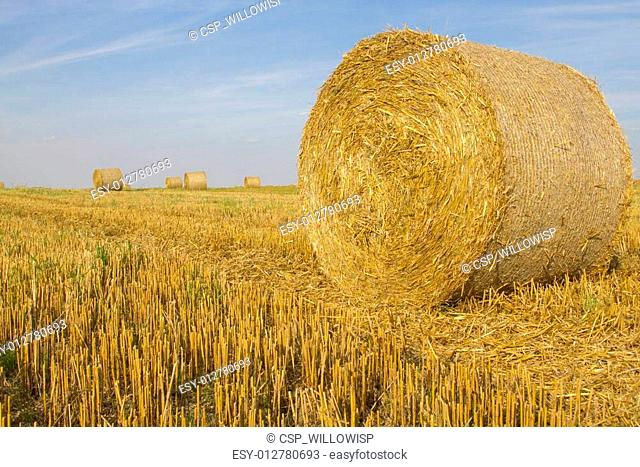 Round wheat straw bales in a field