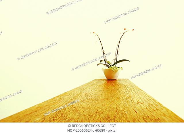 Potted plant on a wooden base