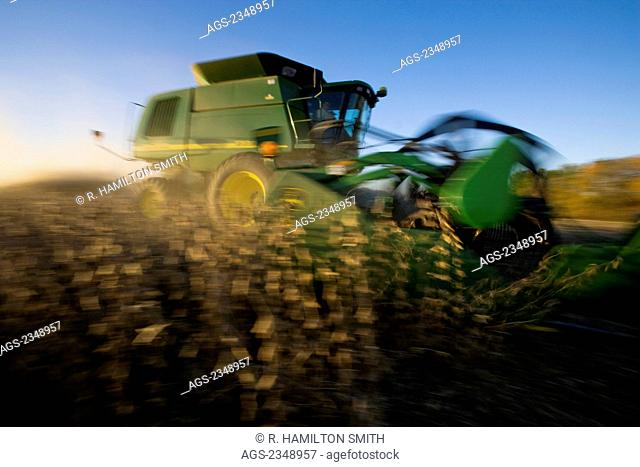 Agriculture - Motion study of a John Deere combine harvesting a crop of soybeans in Autumn / near Northland, Minnesota, USA