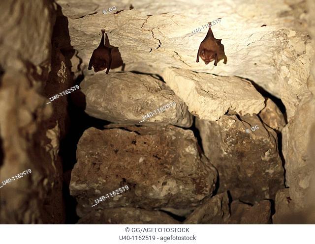 Guatemala, Peten, El Mirador basin, Bats in ruins