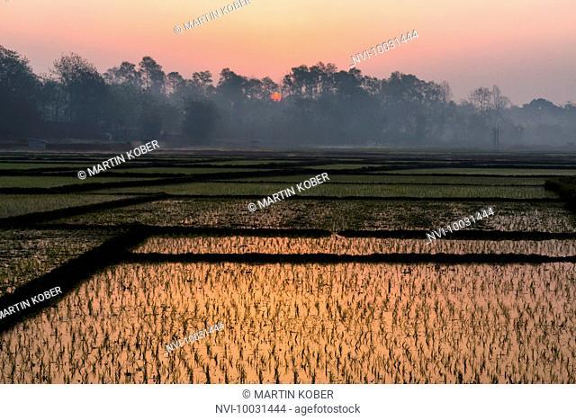Sunrise over the rice fields in Terai, Nepal