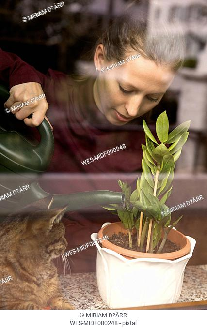 Woman with cat watering plant at the window