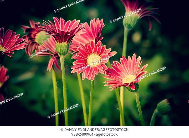 Vintage style widlflowers