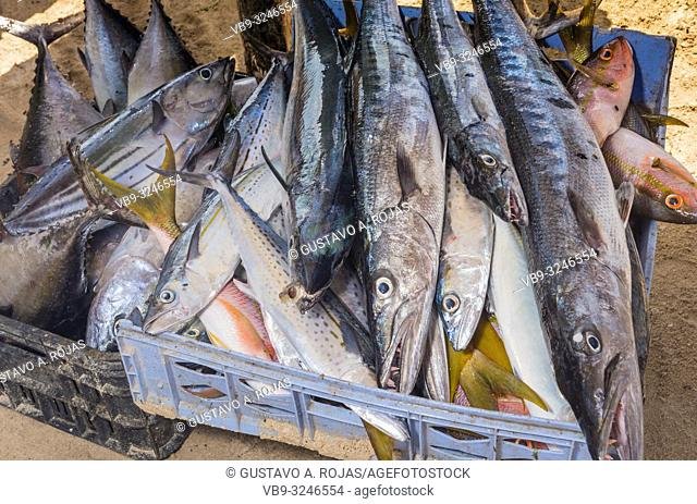 fresh fish seafood and fish market in los roques