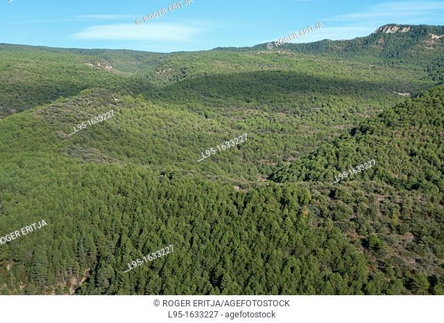 Green oak forest Mediterranean landscape, Lleida, Spain
