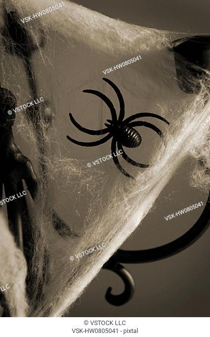 Spider on web on candleholder