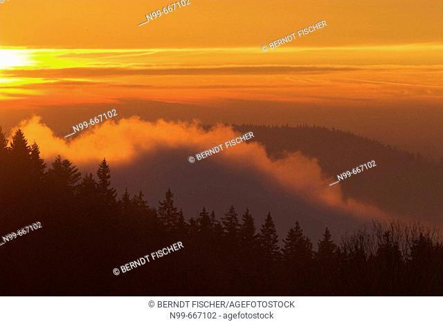 Bohemian Forest, sunrise and fog in autumn, pine forest near Bucina, South Bohemia, National Park of Sumava, Czech Republic