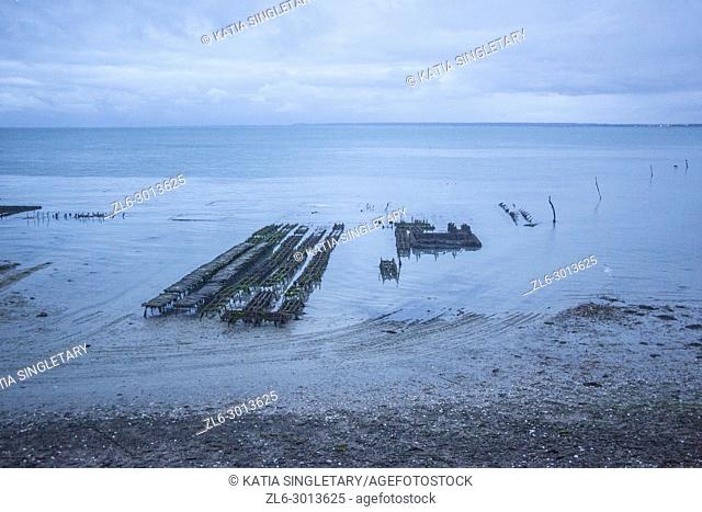 Oyster farming in France, in Cancale. We can see the wood and oysters as this is sunrise at low tide Brittany, France
