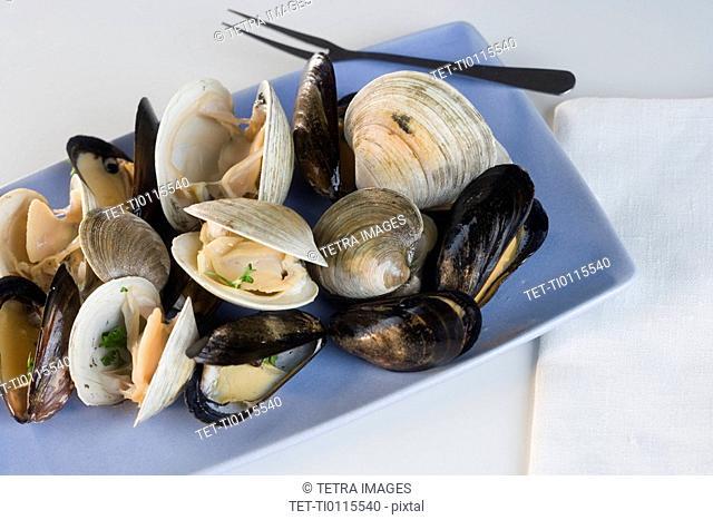 Still life of clams