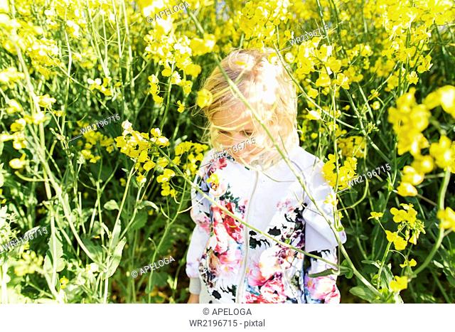 Cute girl amidst plants at rapeseed field on sunny day
