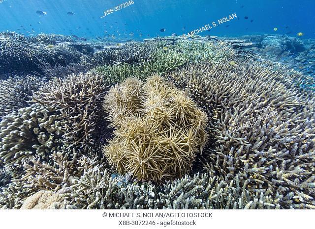 A profusion of hard and soft corals on Sebayur Island, Komodo National Park, Flores Sea, Indonesia