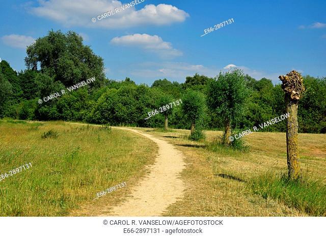 Path going in field. Photo taken in Heerlen (province of Limburg in the Netherlands)