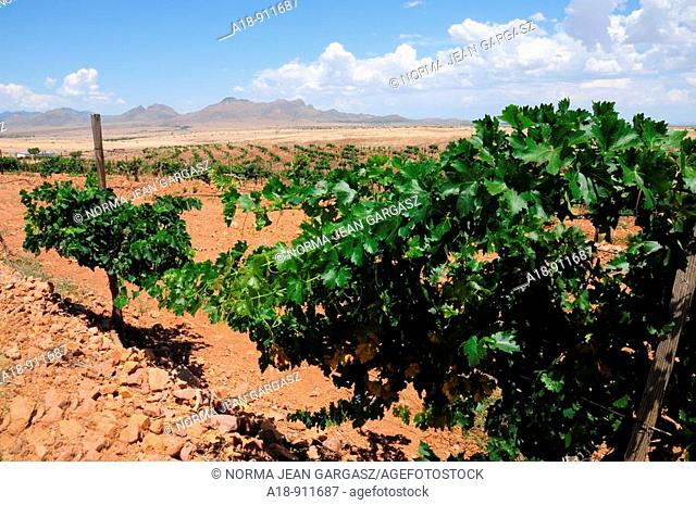 Augustfest is celebrated with wine-tasting, winery and vineyard tours, horseback rides, grape-stomping, music, and lunch at the Sonoita Vineyards Harvest...