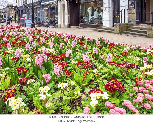 Spring Flowers in the Montpellier Quarter Harrogate North Yorkshire England