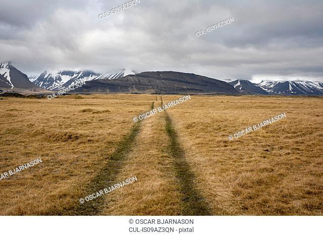 Vehicle tracks through field, Westfjords, Iceland