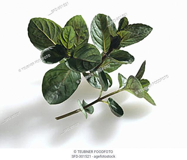Peppermint, 'Mitcham' (Mentha x piperita var. piperita)
