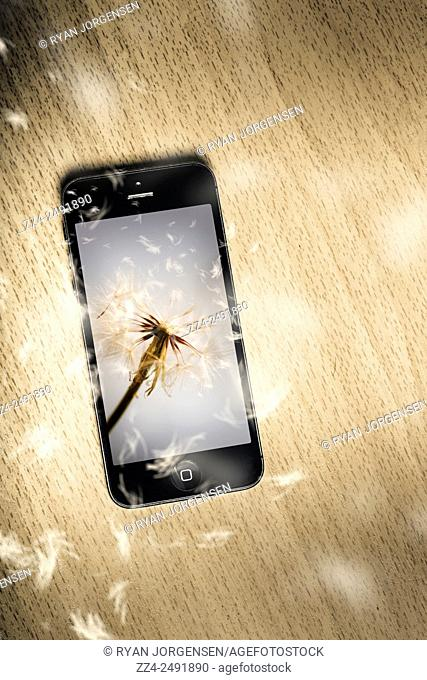 Creative technology apps concept of a modern smartphone sitting on a wooden desk with dandelion petals spreading like wildflowers