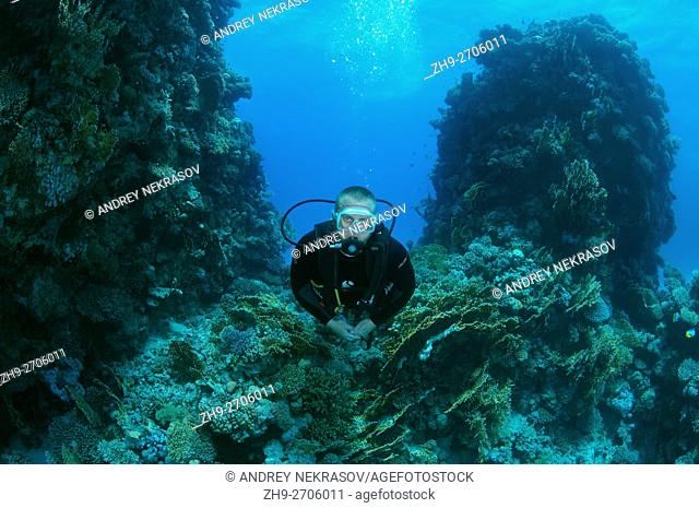 Male scuba diver with a coral reef, Coral pillars, Red sea, Egypt