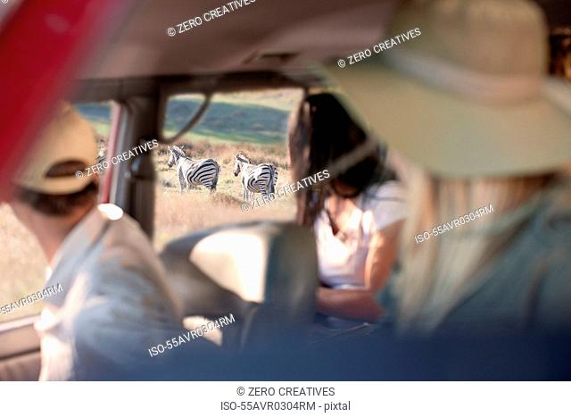 People looking at zebras through vehicle window, Stellenbosch, South Africa
