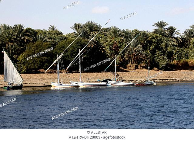 FELUCCAS & PALM TREES; RIVER NILE, EGYPT; 09/01/2013