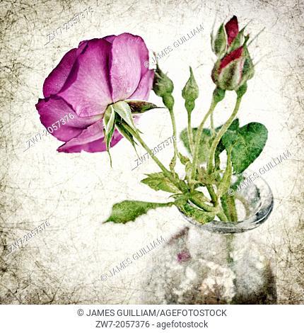 Rose flower in vase, textured image