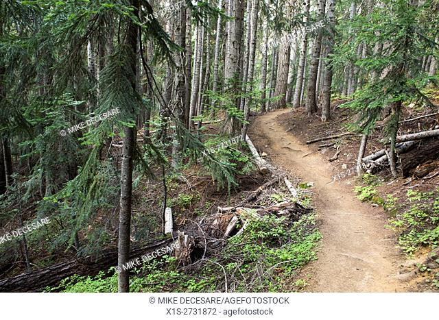 A hiking trail winds through a sub-alpine forest in the Pacific Northwest