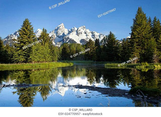 Grand Teton mountains with pond and trees in morning light