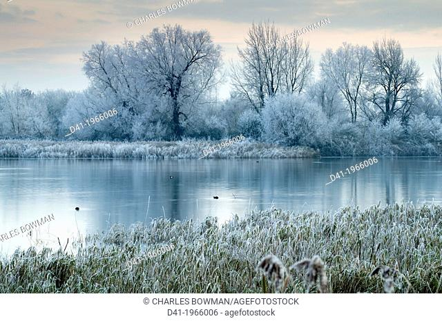UK, England, Gloucestershire, Cotswold Water Park, winter flood