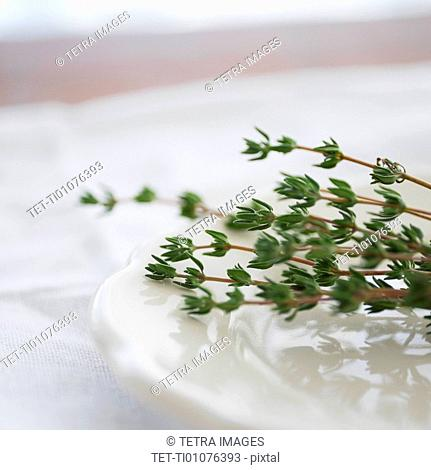 Thyme on plate