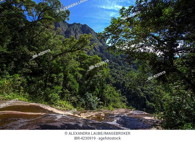 Creek in rainforest, Marojejy National Park, northeast Madagascar, Madagascar