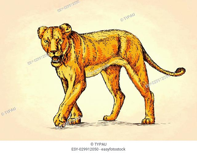 color brush painting ink draw isolated lion illustration