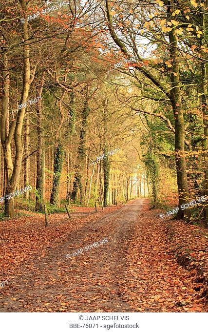 Dirt road through Appelbergen in autumn