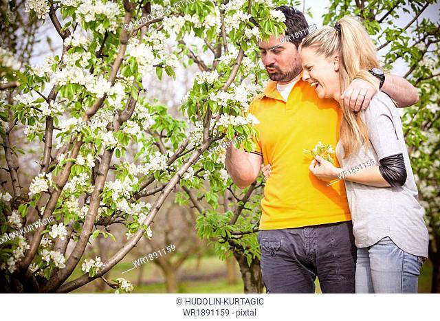 Happy couple picking cherry blossoms, Austria
