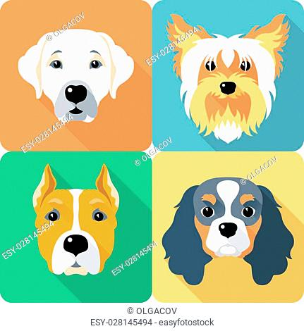 Set icon flat design dogs different breed: Cavalier King Charles Spaniel and Yorkshire terrier, Labrador Retriever and American Staffordshire Terrier