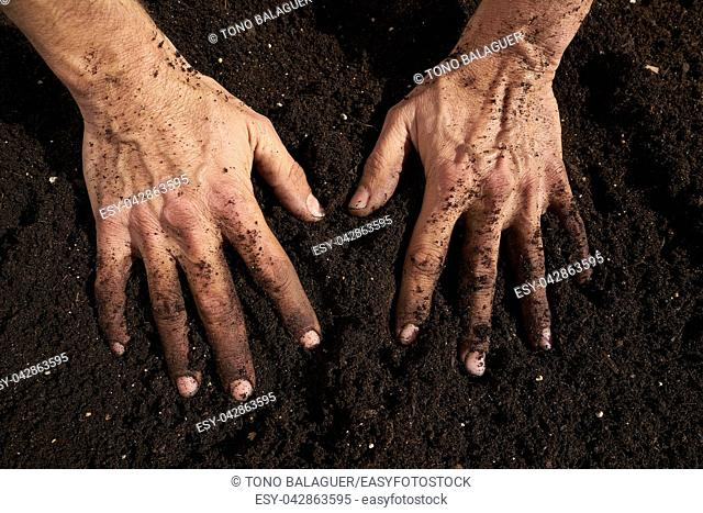 Farmer man hands dirty on substratum of urban garden orchard