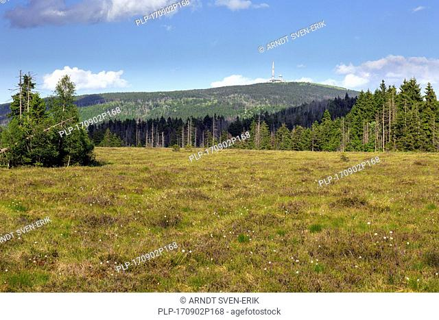 Raised bog at Großes Torfhausmoor / Radaubornmoor and the mountain Brocken, Harz National Park, Lower Saxony, Germany