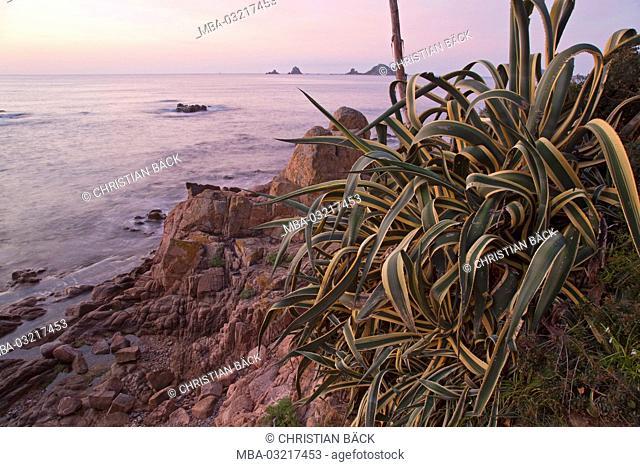 Italy, Sardinia, East coast, province of Ogliastra, Santa Maria Navarese, beach, agave