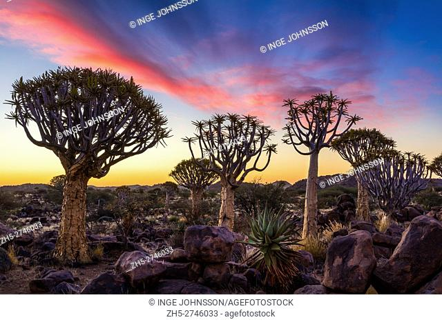 The Quiver Tree Forest (Kokerboom Woud in Afrikaans) is a forest and tourist attraction of southern Namibia. It is located about 14 km north-east of...