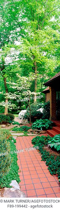 Red tile walk with Plantan Lily (Hosta sp.) and Dogwood (Cornus florida) at front of home. West Virginia. USA