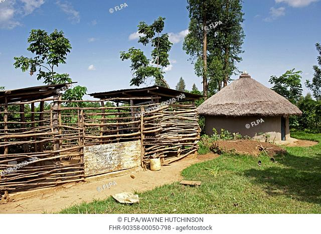 Farmyard with shed for family cow constructed from branches beside traditional hut, Kenya, June