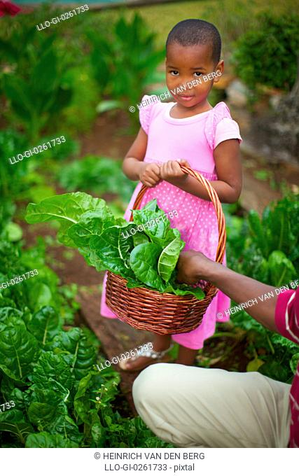 Young girl looking at the camera while standing in a cabbage patch, KwaZulu-Natal, South Africa