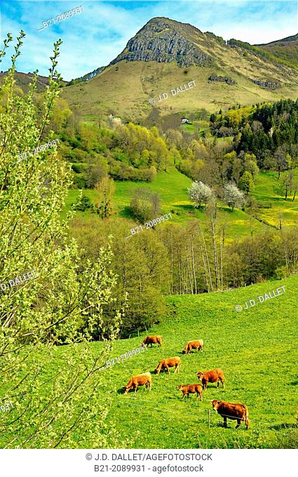 """France. Auvergne. Cantal. Jordanne valley, by Saint Julien, where the famed """"Salers"""" cheese is made"""