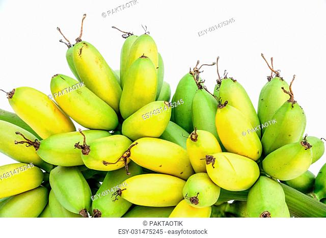 Ripe Pisang Mas banana or Musa :Kluai Khai, famous small golden