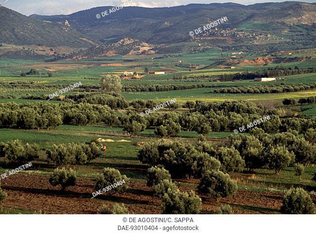 Agricultural landscape near Khenifra, Middle Atlas mountains, Morocco