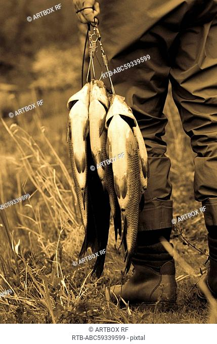 Mid section view of a person carrying fish